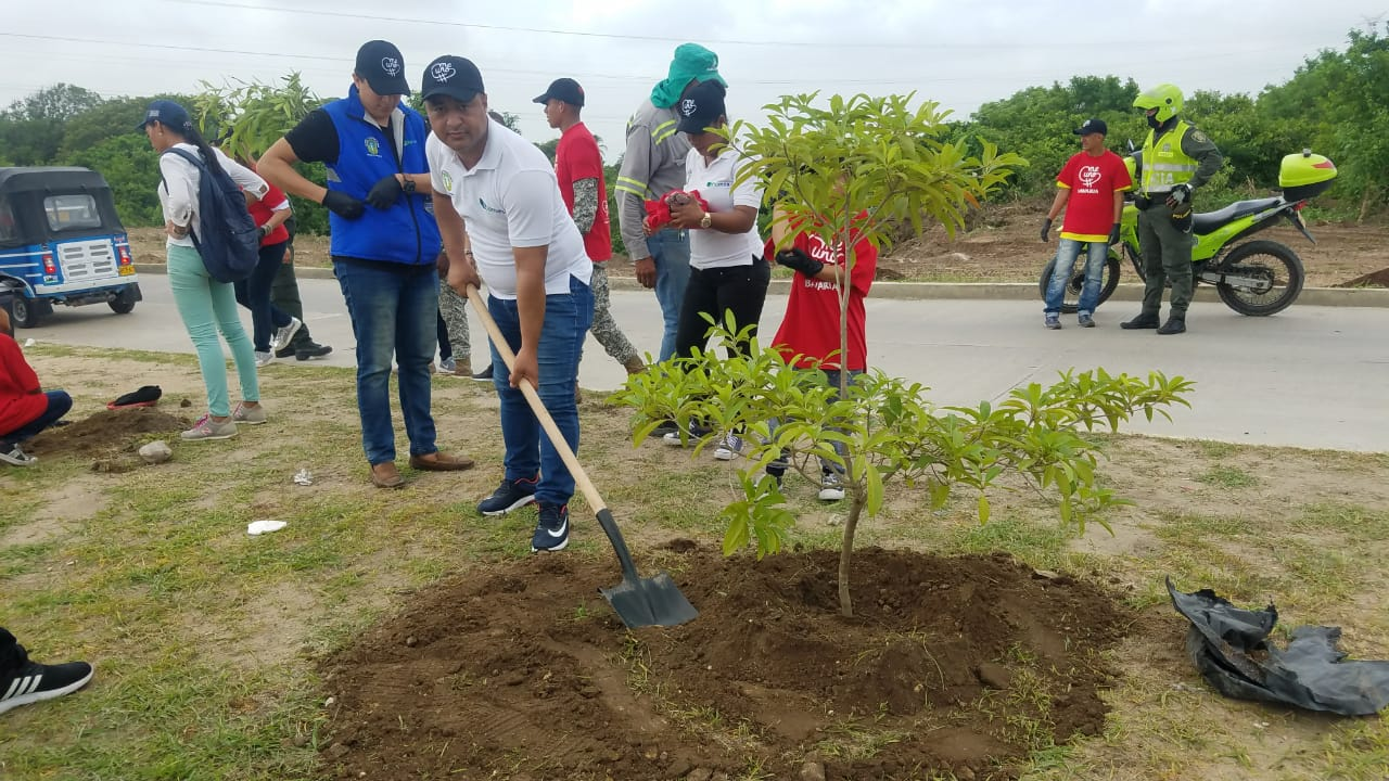 Con Siembra De 2.162 árboles, Soledad Minimizará Huella De Carbono